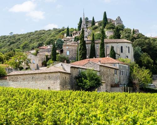 La Roque Sur Cèze Vines