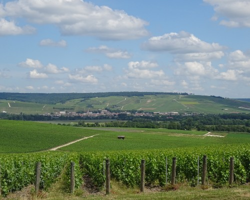 Champagne Countryside