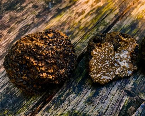 Burgundy Truffles