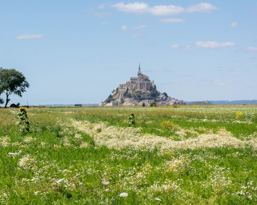 Mont-Saint-Michel Countryside